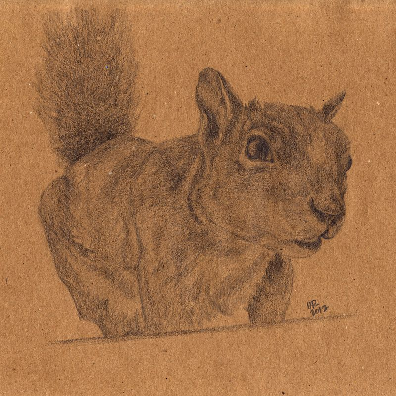 Squirrel-small
